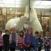 В зоологическом музее 2