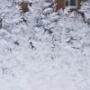 Зимние узоры в канун весны
